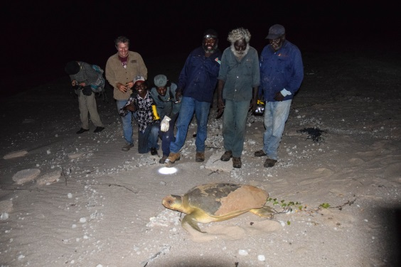 Ranger_Crew_with_Turtles